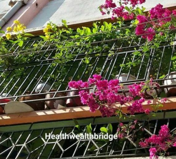 Balcony gardening:A;lamunda for your balcony