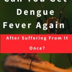 Can You Get Dengue Fever Again After Suffering From It Once?