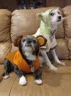 dogs at halloween 2018
