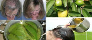 Guava Leaves Can Extremely 100% Stop Your Hair loss And Make It Grow
