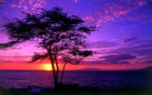 sunset-bkgd-1920x1200