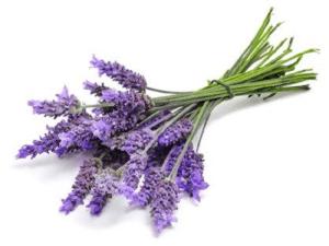 Lavender body butter creme