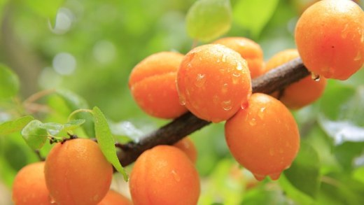 peaches-824624__340
