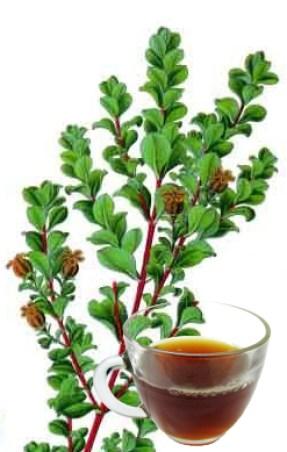 Buchu Tea