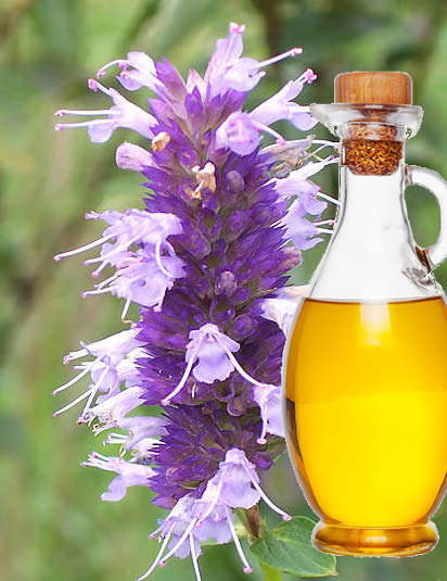 The Health Benefits of Hyssop Oil