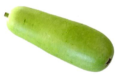 Bottle Gourd Vegetable