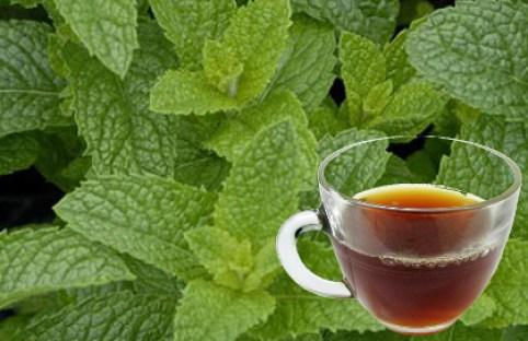Strong Back Tea