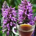 Betony Herb Tea