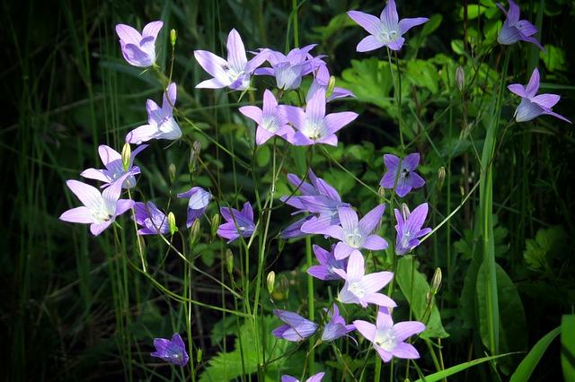 flower-2283197_640