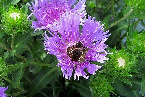 flower-3644963__340