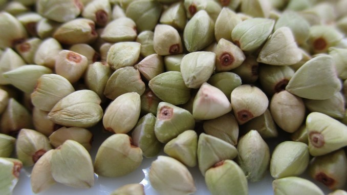 buckwheat-2351285_960_720