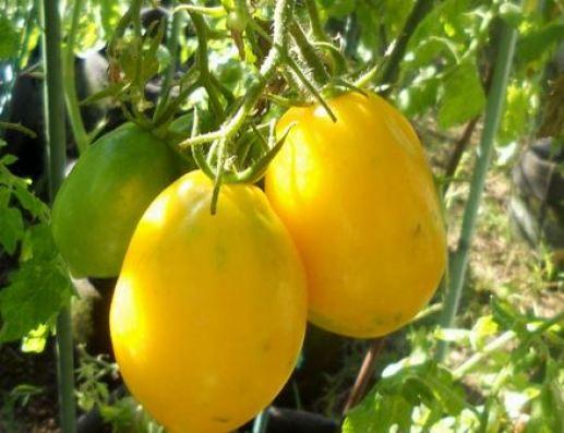 lemom-plum-papaya-2432341_960_720