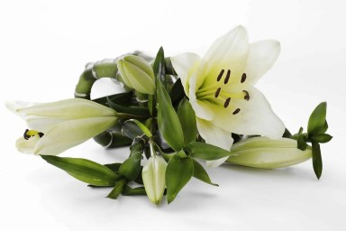 easter lily for easter family traditon