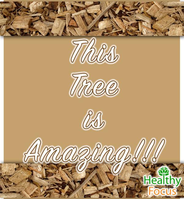 mig-Tree-is-Amazing