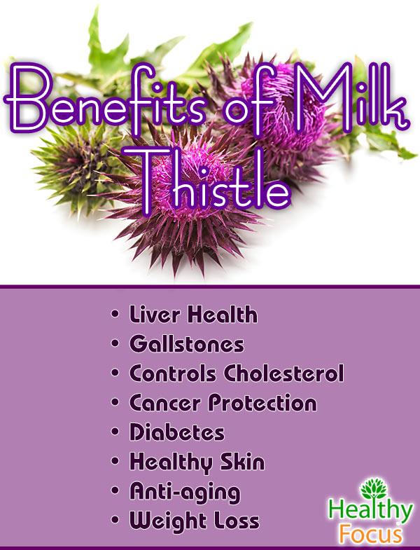 mig-Benefits-of-Milk-Thistle
