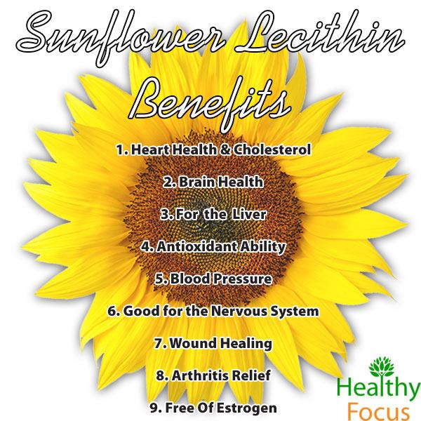 mig-Sunflower-Lecithin-Benefit