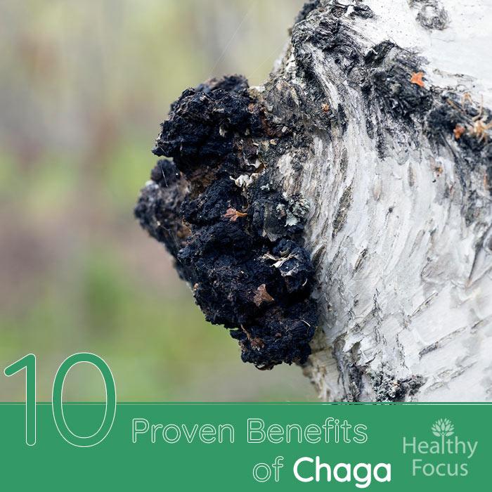Benefits of Chaga