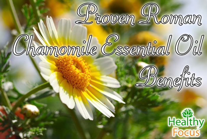 Roman Chamomile Essential Oil Benefits