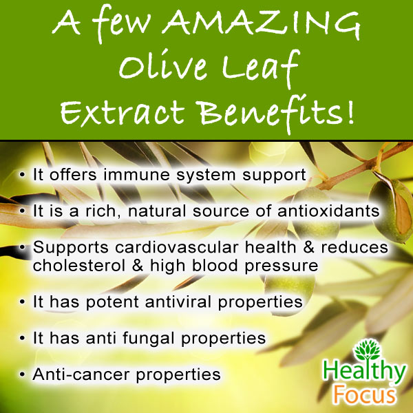 Olive Leaf Extract Benefits And Side Effects Healthy Focus