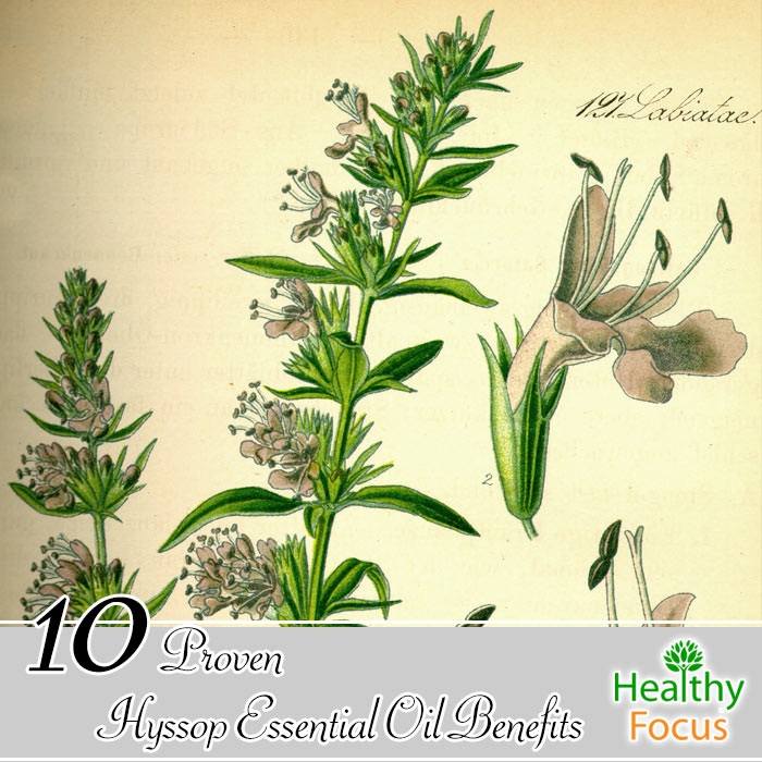 hdr-10-Proven-Hyssop--Essential-Oil-Benefits
