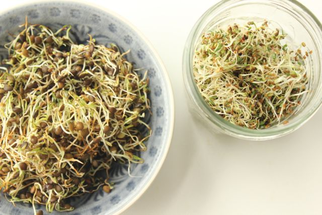 Sprouted lentials and alfalfa - www.healthyhappysteffi.com