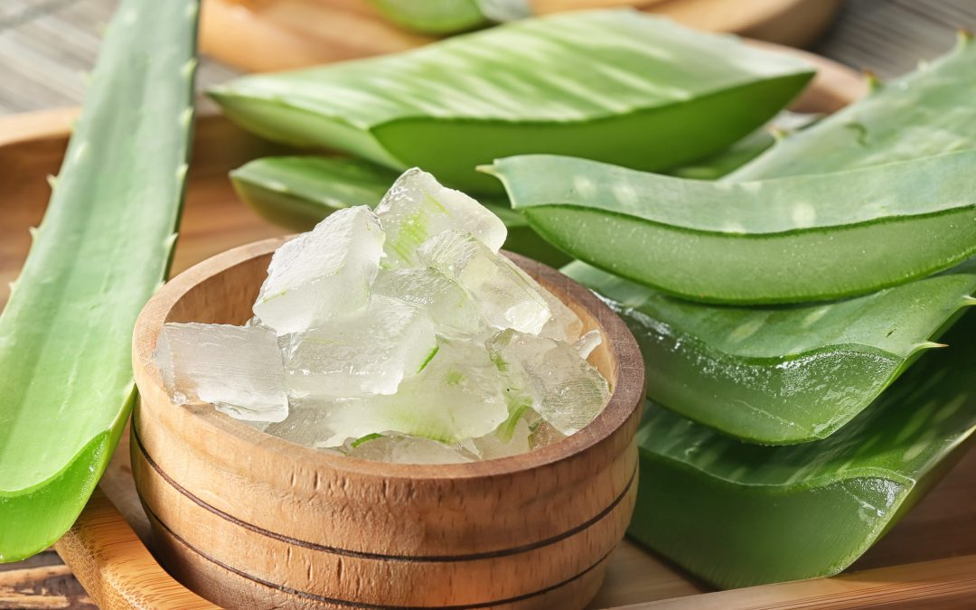 Aloe You Ever Wanted – Aloe You Ever Needed