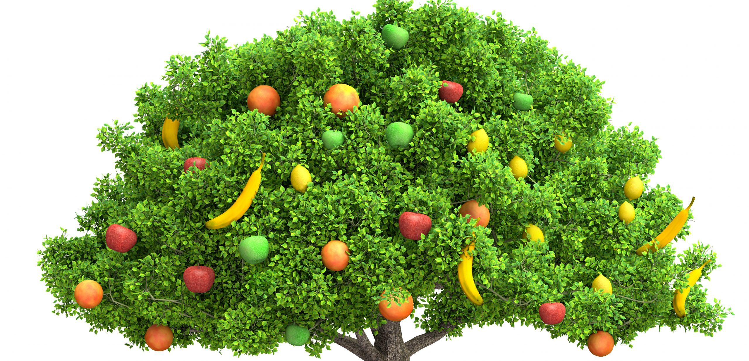 How To Grow Your Fruit Salad On One Tree Healthy Healing Eats