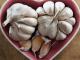 heart health garlic supplements