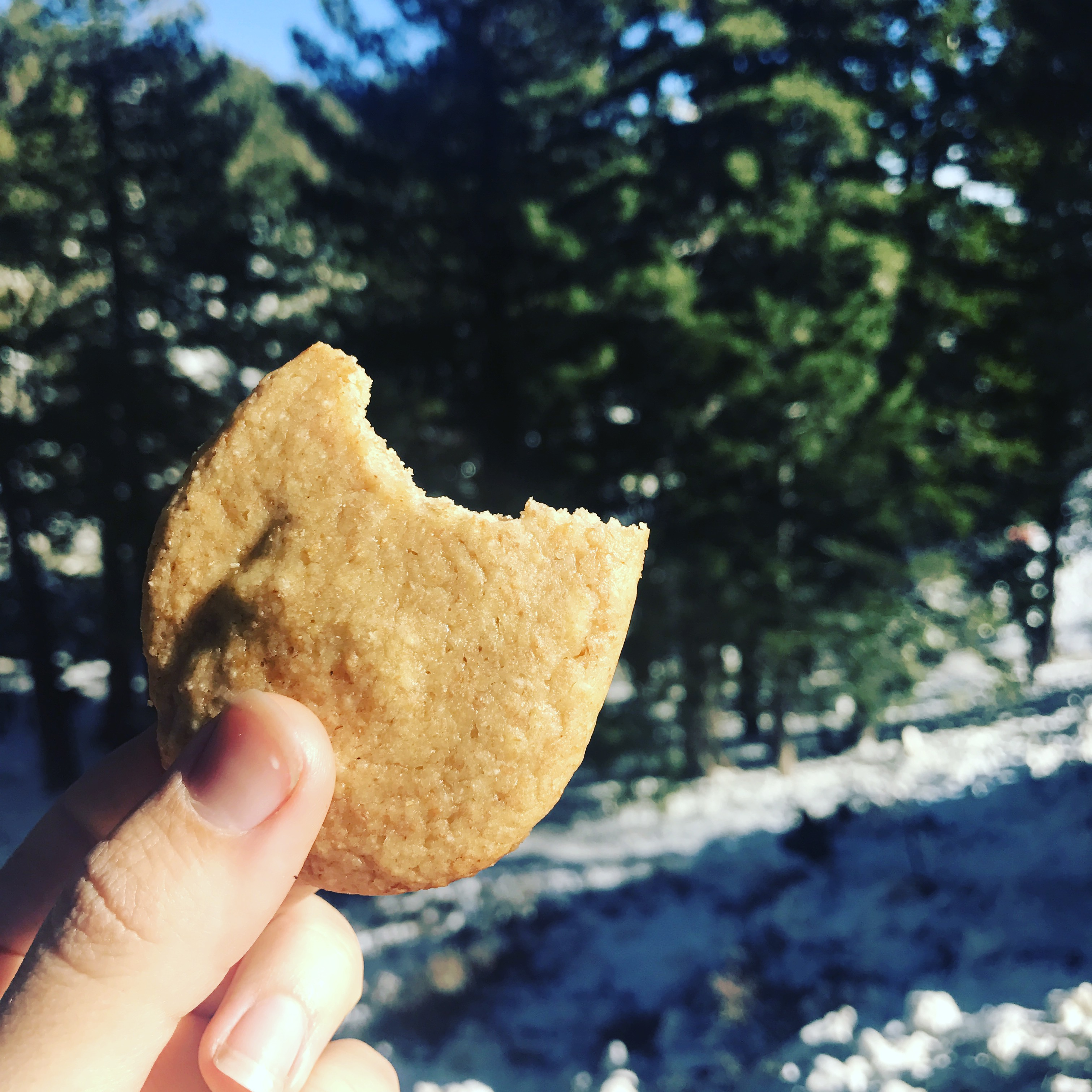 Why Sugar Cookies Can Be An Option For You