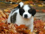 training-pups