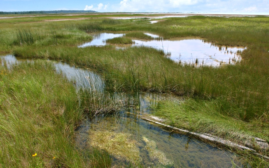 Coalition Opposes Trump Roll-back of Clean Water Protections