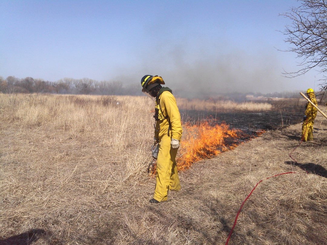 A member of the Calumet Conservation Corps burns grass to regenerate the ecosystem.