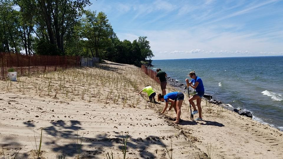 People planting on a beach