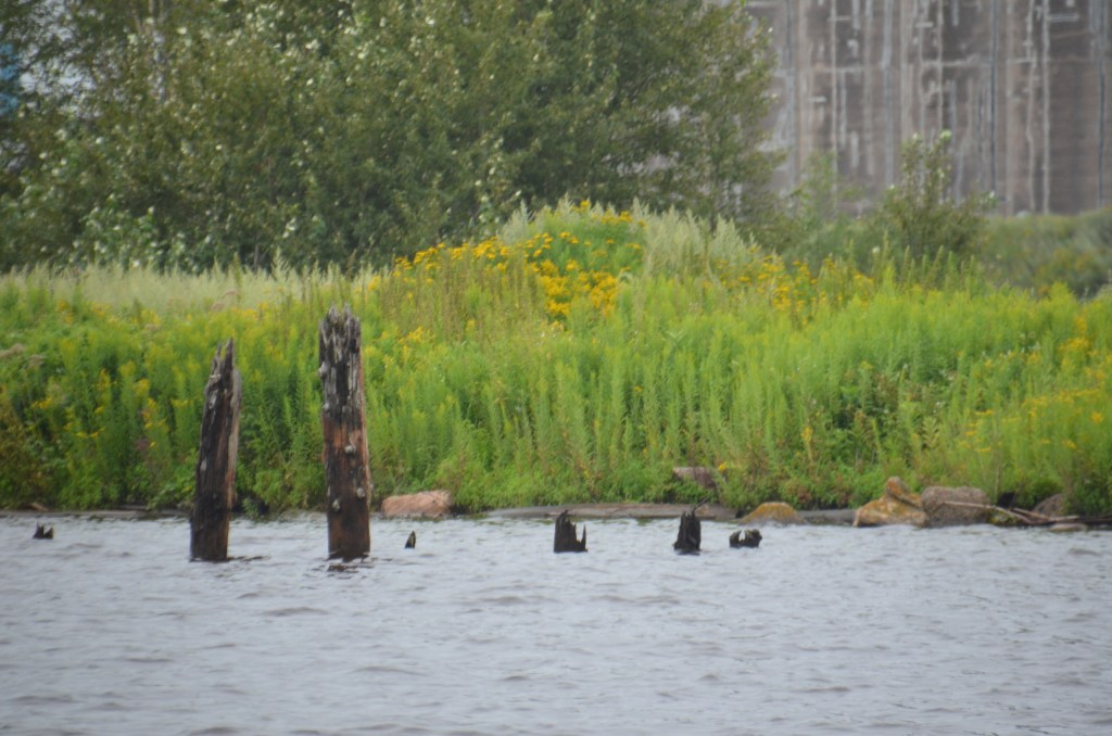 Wood sticks out of the water in an industrial area