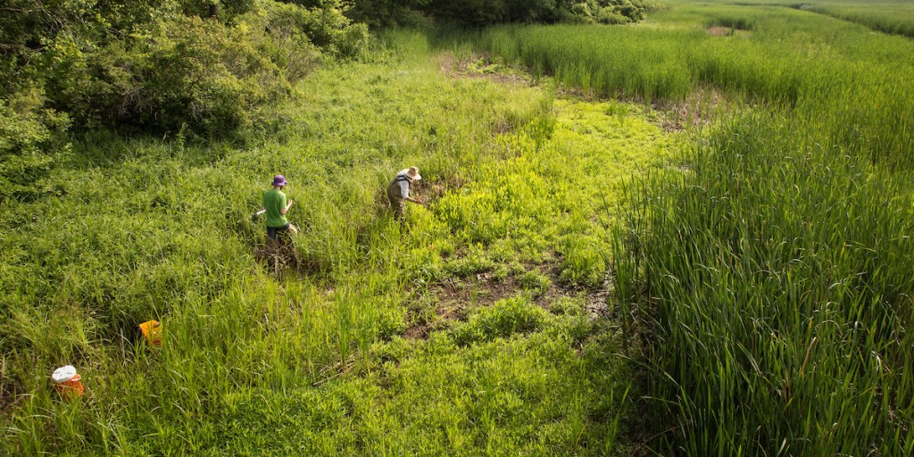 View of workers tending to a wetland area