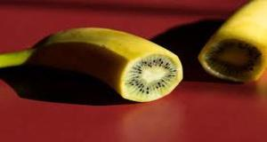 Can You Really Grow A Banana Kiwi Hybrid? ( VIDEO )