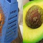 Once You Learn This You Will Never Throw Away The Avocado Pit Again