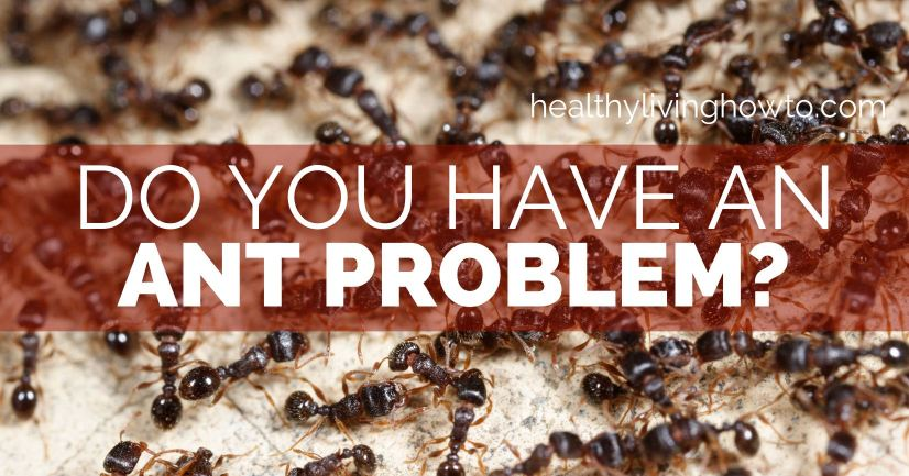 Do You Have An Ant Problem | healthylivinghowto.com