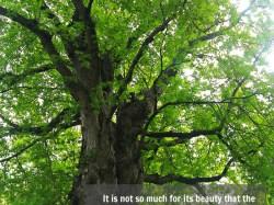 Tuesday Tree