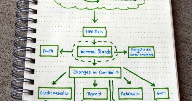 Stress: The Link to Adrenal Fatigue and Our Health Part I