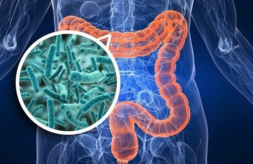 Gut microbiota and cancer prevention