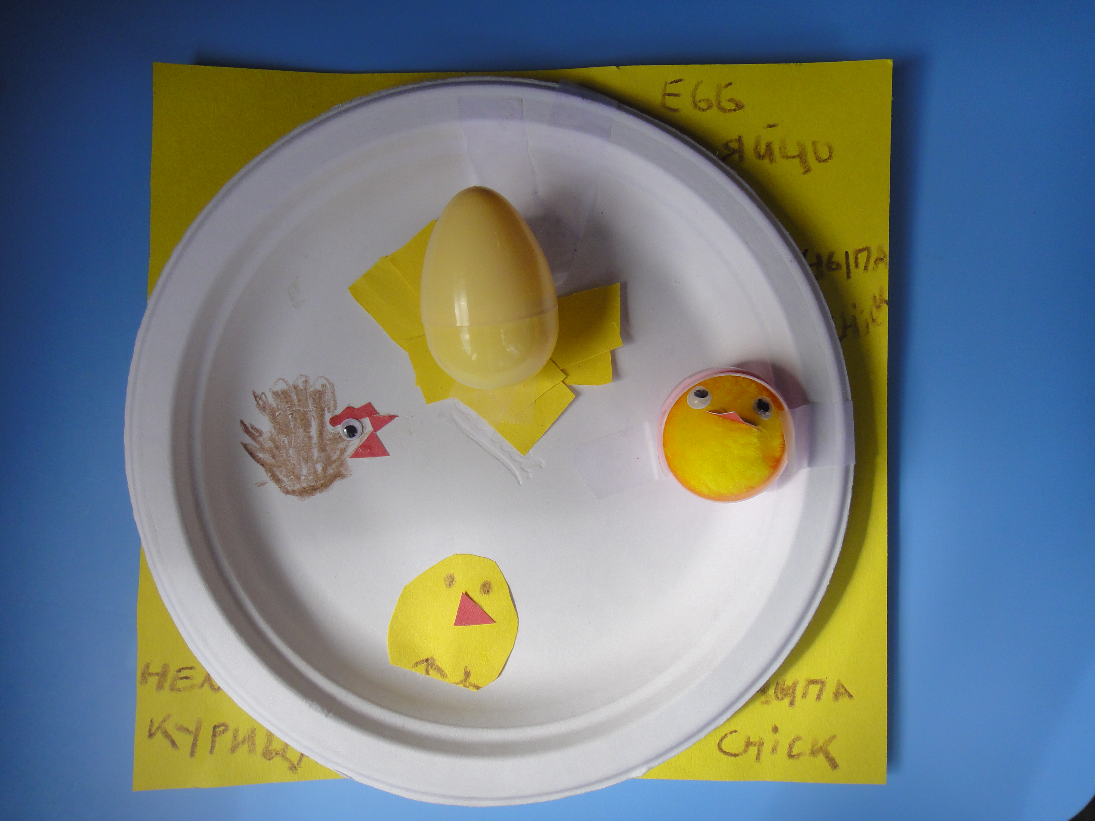 Lifecycle Of A Chicken And Word Game