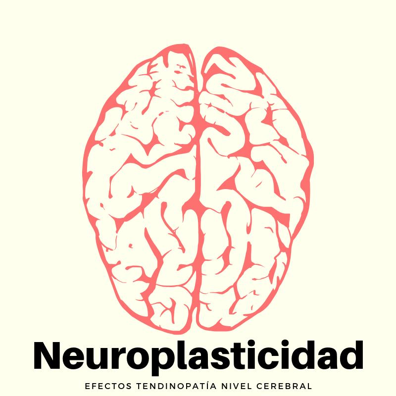 Neuroplasticidad y Tendinopatía