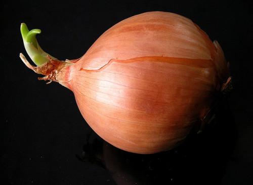Red Onion - Liz West