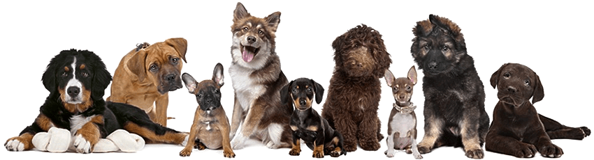 about your pet dr cathy alinovi veterinarian clearwater florida