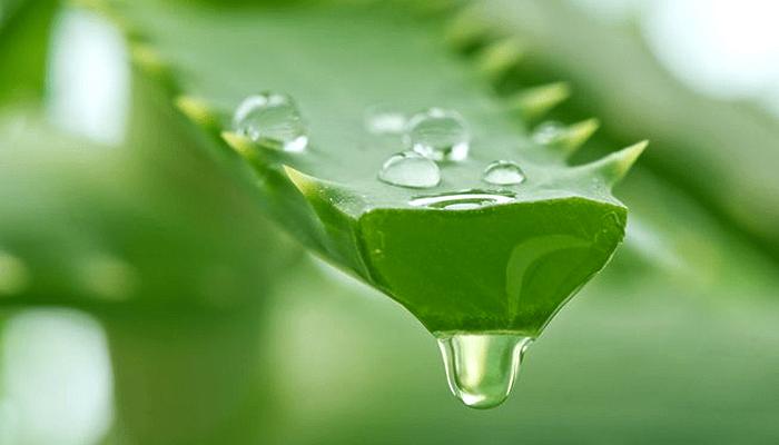 Special Ingredient Saturday – Aloe Vera