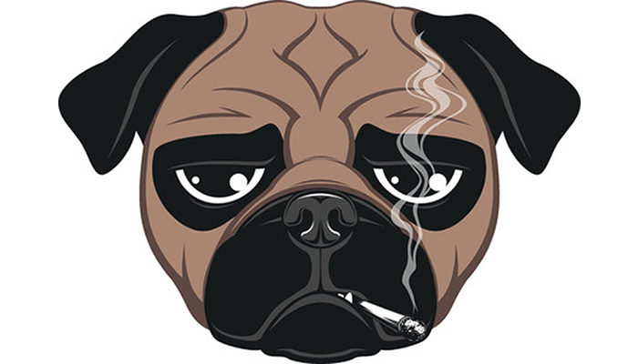 The Canary in the Coal Mine – Second- & Third-Hand Cigarette Smoke is Dangerous for Pets