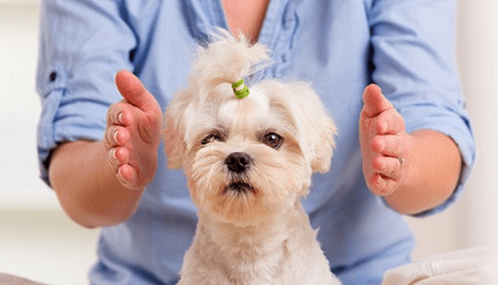 What is Reiki & How it Might Help my Pet?