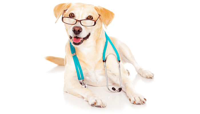 Ten Questions to Ask When Shopping for a New Veterinarian