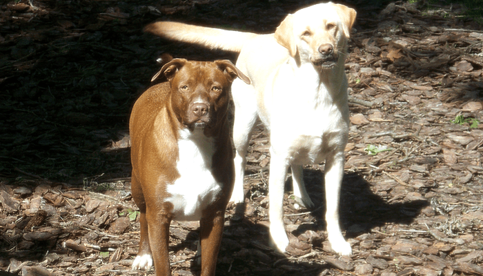 Training Myth: A Wagging Tail is a Sign that all is Well with my Dog or Cat